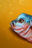 Pescados secados Vomero Fotografía de archivo libre de regalías