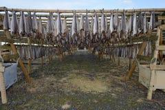 Pescados secos foto de archivo libre de regalías