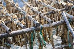 Pescados secos Imagen de archivo libre de regalías