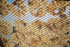 Pescados secos 6 Foto de archivo