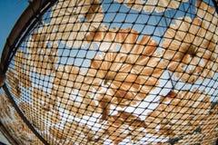 Pescados secos 13 Foto de archivo