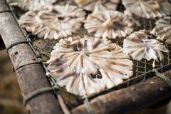 Pescados secos 21 Foto de archivo