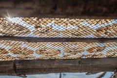 Pescados secos 35 Fotografía de archivo libre de regalías