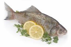 Pescados sin procesar con el limón y el perejil Fotografía de archivo