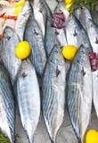 Pescados sin procesar del bonito Fotos de archivo