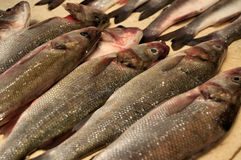 Pescados sin procesar para la venta Imágenes de archivo libres de regalías