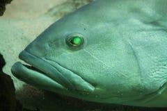 Pescados subacuáticos Fotografía de archivo
