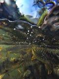 Pescados subacuáticos Foto de archivo