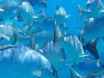 Pescados subacuáticos Imagen de archivo libre de regalías