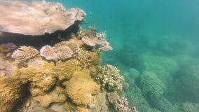 Pescados subacuáticos con el arrecife de coral almacen de video