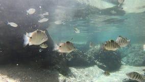 Pescados submarinos de la piscina natural almacen de metraje de vídeo