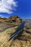 Pescados trenzados en la playa del rancabuaya Fotos de archivo