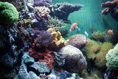 Pescados tropicales fotos de archivo libres de regalías