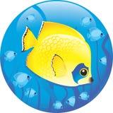 Pescados tropicales Libre Illustration