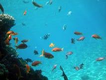 Pescados tropicales imágenes de archivo libres de regalías