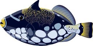 Pescados tropicales Balistoides Conspicillum stock de ilustración