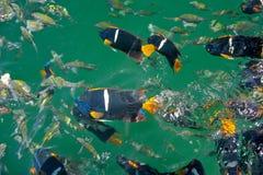 Pescados tropicales coloridos Imagen de archivo libre de regalías