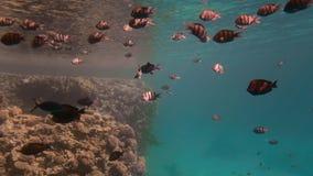 Pescados tropicales coloridos contra un suelo marino y un arrecife de coral azules Los rayos del sol hacen su manera a trav?s del almacen de metraje de vídeo