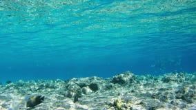 Pescados tropicales coloridos en Coral Reefs Underwater en el Mar Rojo, Egipto Lapso de tiempo almacen de video