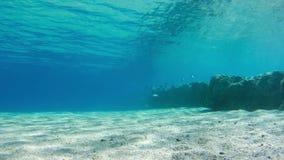 Pescados tropicales coloridos en Coral Reefs Underwater en el Mar Rojo, Egipto Lapso de tiempo almacen de metraje de vídeo