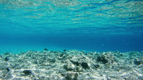 Pescados tropicales coloridos en Coral Reefs Underwater en el Mar Rojo, Egipto Lapso de tiempo metrajes