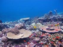 Pescados tropicales del arrecife de coral Fotos de archivo libres de regalías