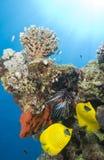 Pescados tropicales del filón coralino. Imágenes de archivo libres de regalías