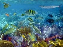 Pescados tropicales del filón del Caribe subacuáticos Fotos de archivo libres de regalías