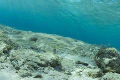 Pescados tropicales del filón de Cozumel Fotografía de archivo