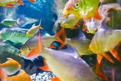Pescados tropicales en el acuario de Dubai Imágenes de archivo libres de regalías