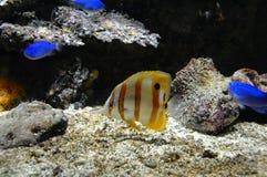 Pescados tropicales en el parque zoológico Fotografía de archivo libre de regalías