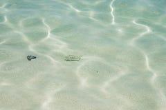 Pescados tropicales en la isla del misterio imagen de archivo libre de regalías