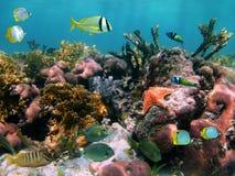Pescados tropicales en los corales Fotos de archivo
