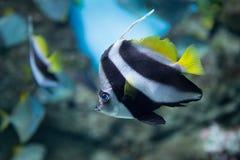 Pescados tropicales en Moscú Oceanarium Foto de archivo