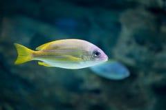 Pescados tropicales en Moscú Oceanarium Imágenes de archivo libres de regalías