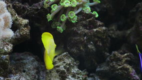 Pescados tropicales en un acuario