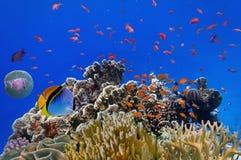 Pescados tropicales en un filón coralino Imágenes de archivo libres de regalías