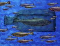 Pescados verdes atrapados en la botella de cristal Foto de archivo libre de regalías