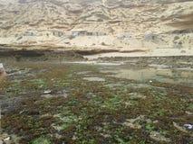 Pescados verdes de la naturaleza de la roca de la playa Imagen de archivo libre de regalías