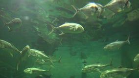 Pescados, vida marina, acuarios, animales, naturaleza metrajes