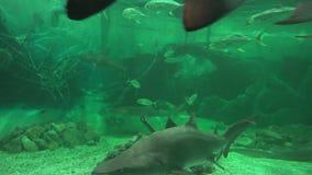 Pescados, vida marina, acuarios, animales, naturaleza almacen de video
