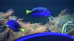 Pescados, vida marina, acuarios, animales, naturaleza almacen de metraje de vídeo