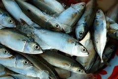 Pescados y alimento Fotografía de archivo