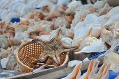 Pescados y cáscaras de la estrella imagen de archivo