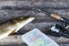 Pescados y caña de pescar de agua dulce del lucio europeo con el carrete que miente en fondo de madera del vintage imagen de archivo