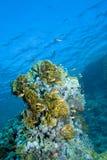 Pescados y coral Fotografía de archivo libre de regalías