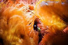 Pescados y Coral Reef Imagenes de archivo