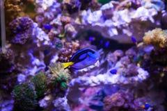 Pescados y corales Imágenes de archivo libres de regalías