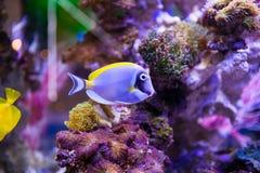 Pescados y corales Foto de archivo