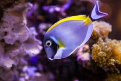 Pescados y corales Imagenes de archivo